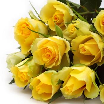 送料無料 誕生日 開店祝い 開院祝い プレゼント おまかせ 黄色オレンジ系バラの花束 開院祝い 花 人気ランキング 花ギフト 花束 結婚記念日 (就任 送別 誕生日 などにも) バラ 就任 送別 81 花束