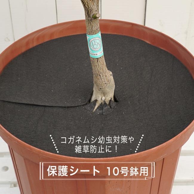 コガネムシの幼虫予防カバー 10号用 (直径29cm) 100枚セット雑草・ネキリムシの防止不織布