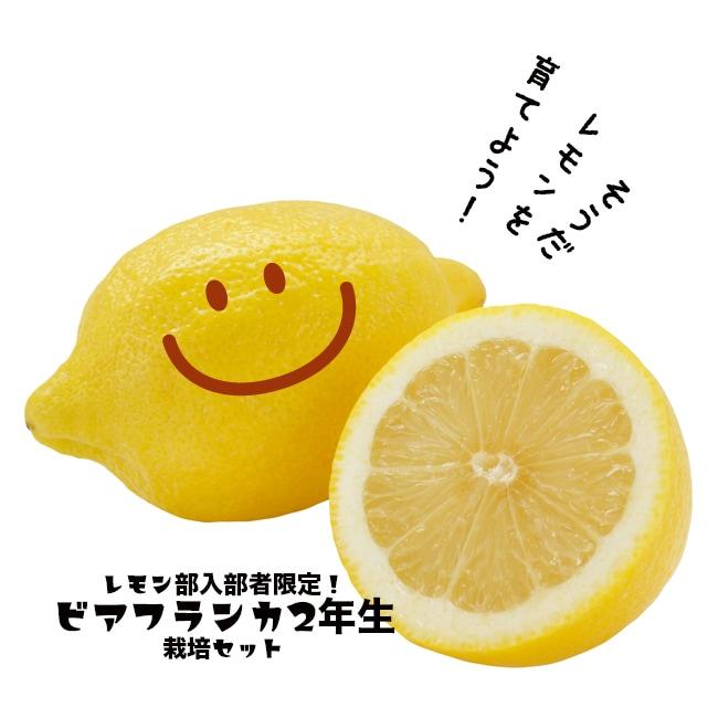 レモン部10期生入部届け入部テスト合格後にリスボンレモン2年生 接ぎ木 苗6号スリット鉢植え栽培セットをお届けします。