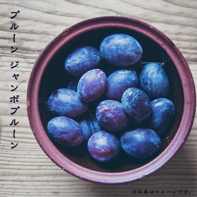 プルーンの中でも特別大きな果実がなる特大果品種 ジャンボプルーン 高い素材 プルーン クリアランスsale!期間限定! 1年生 接木苗