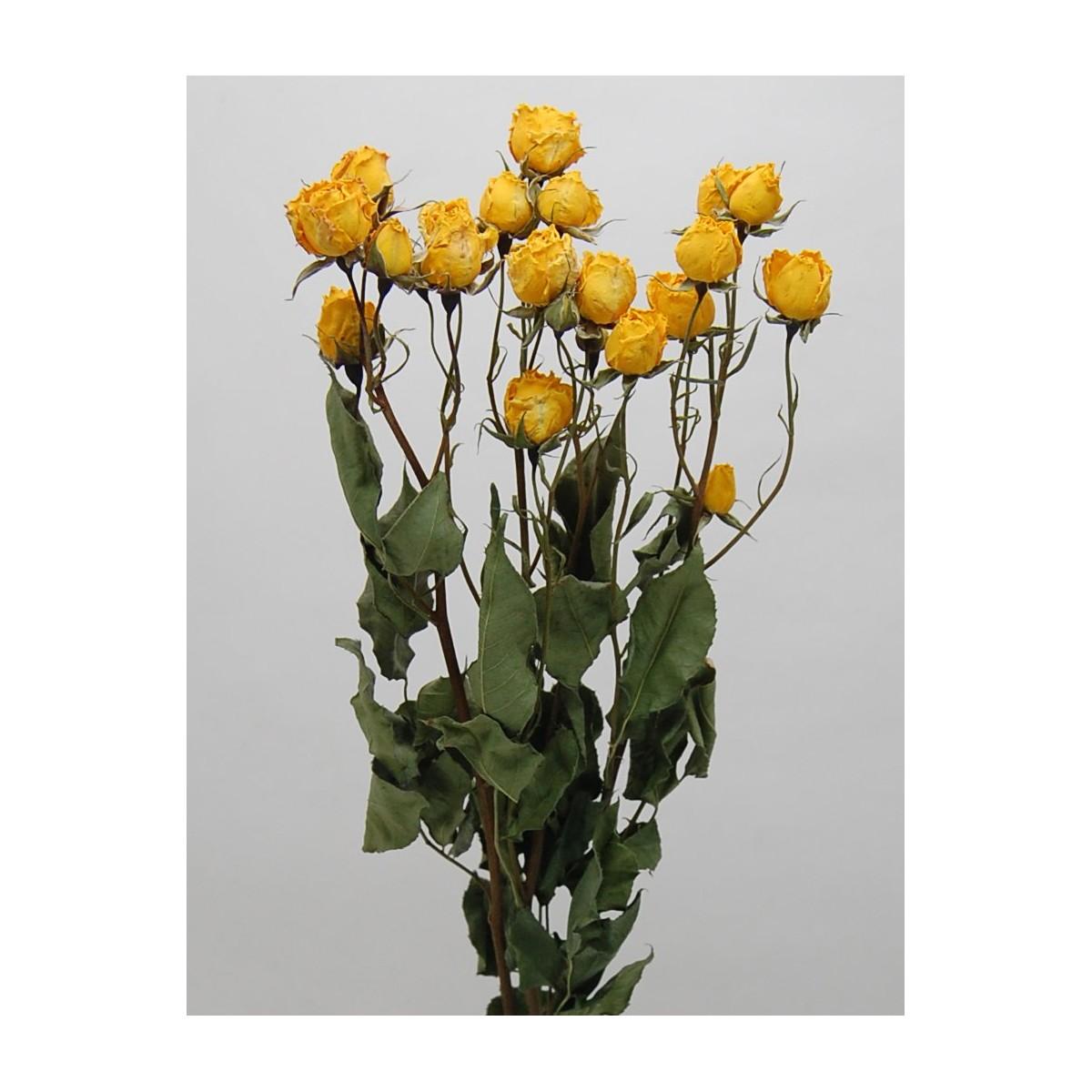 【ドライ】コアトレーディング/スプレーローズ・イエロー系 2~3本 ナチュラル/17825【21】【21】【取寄】[10束]《 ドライフラワー ドライフラワー花材 バラ(ローズ) 》
