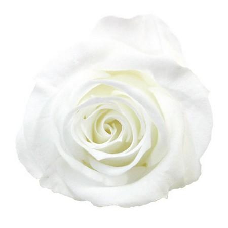 【プリザーブド】ヴェルディッシモ/ミニ Aバルク ホワイト 72輪入/58-901【01】【取寄】