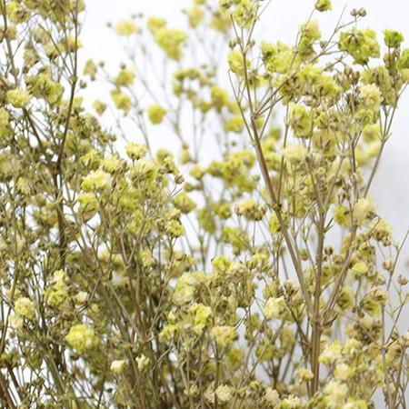 プリザーブドフラワー プリザーブドフラワー花材 カスミ草 5☆大好評 手作り 材料 即日 13714 期間限定送料無料 プリザーブド ピスタチオ 約25g入り ヴェルモント