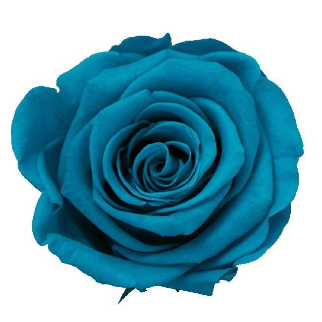 プリザーブドフラワー プリザーブドフラワー花材 バラ お金を節約 ローズ お気にいる 手作り 材料 即日 アクアマリン KIARA PG004-19プリザーブドフラワー 3輪 プリザーブド ローズLL