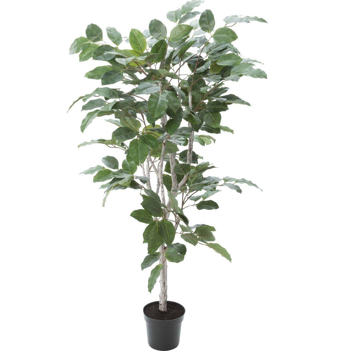 【直送】【人工観葉植物】YDM/フィカスベンガレンシス/GLP-1517-GR ※返品・代引不可【01】