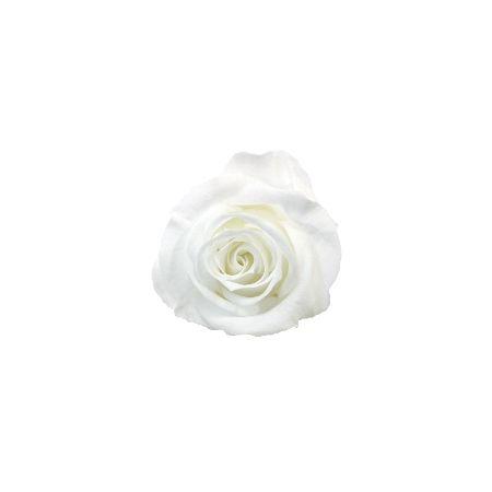 【プリザーブド】ヴェルディッシモ/ ペティート Aバルク ホワイト(90) 90輪 ホワイト/59001【01】【取寄】
