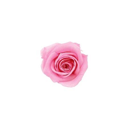 【プリザーブド】ヴェルディッシモ/ ペティート Aバルク ブライダルピンク(90) 90輪 ブライダルピンク/59008【01】【取寄】