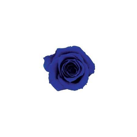【プリザーブド】ヴェルディッシモ/ ペティート Aバルク ロイヤルブルー(90) 90輪 ロイヤルブルー/59018【01】【取寄】
