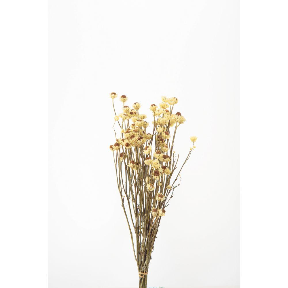 格安 価格でご提供いたします ドライフラワー ドライフラワー花材 アンモビューム 手作り 材料 ドライ 取寄 01 イエロー 10302-500 大地農園 永遠の定番 約25g