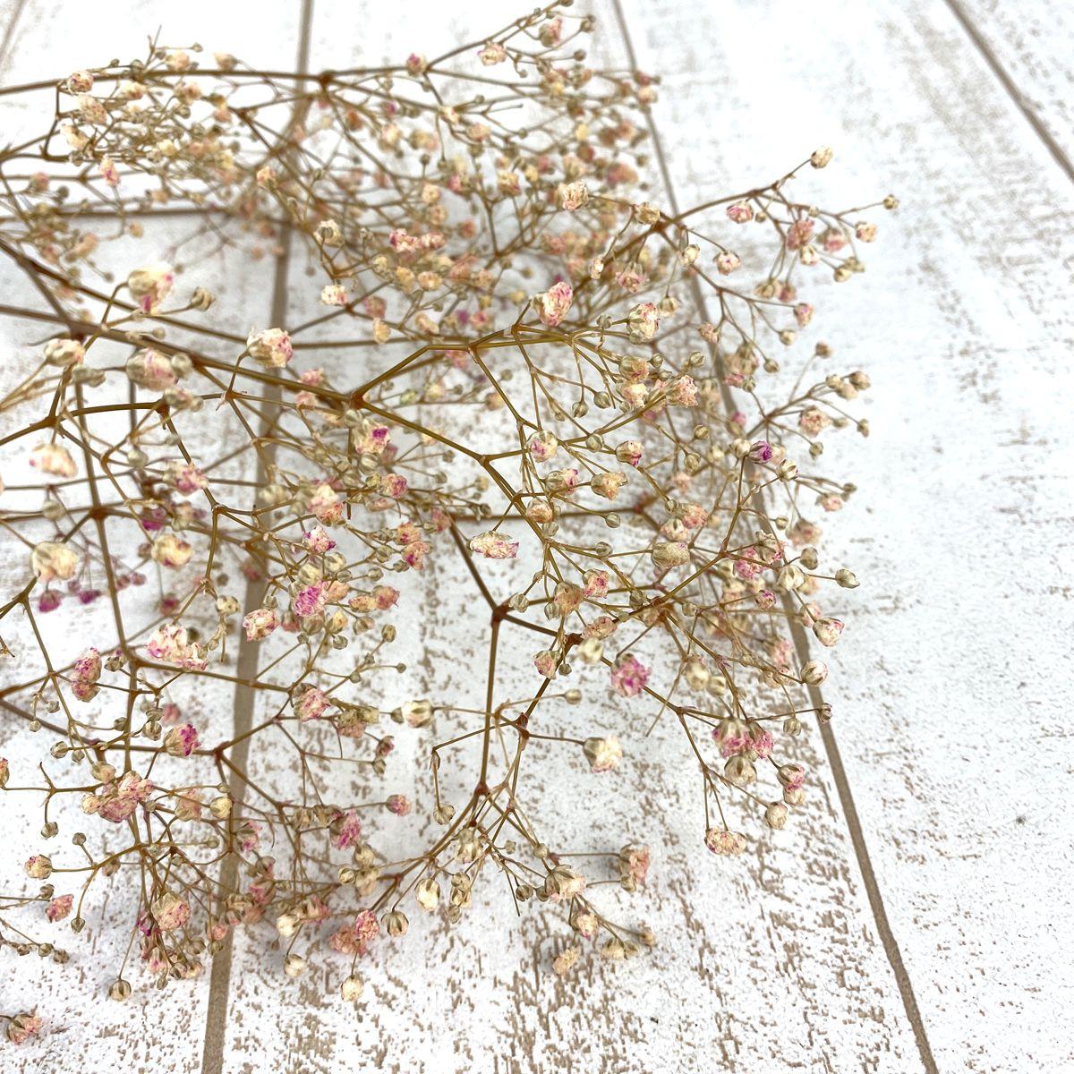 格安 プリザーブドフラワー プリザーブドフラワー花材 カスミ草 メイルオーダー 手作り 材料 即日 約25g入り プリザーブド ヴェルモント バイオレットピンク 13728