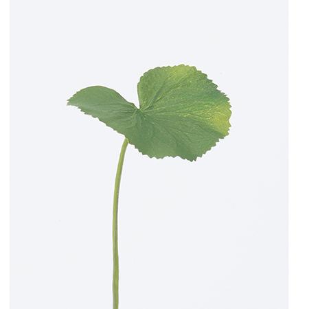 造花 フェイクグリーン ゲイラックス インテリア ブーケ パーツ 即日 【造花】アスカ/ゲイラックス(S) グリーン/A-41228-51A造花(アーティフィシャルフラワー) 造花葉物、フェイクグリーン ゲイラックス 手作り 材料