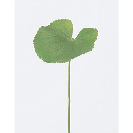 造花 フェイクグリーン ゲイラックス インテリア 贈物 ブーケ パーツ 即日 アスカ 激安価格と即納で通信販売 L 手作り アーティフィシャルフラワー 材料 A-41229-51A造花 造花葉物 グリーン