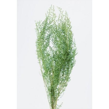 プリザーブドフラワー プリザーブドグリーン 葉物 手作り 材料 即日 開催中 プリザーブド 25g 格安 価格でご提供いたします 大地農園 01090-700 グリーン シャワーグラス