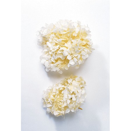 プリザーブドフラワー 大人気 プリザーブドフラワー花材 あじさい 紫陽花 手作り 材料 有名な 即日 ソフトゆめアジサイ オフホワイト 約2輪 01900-010プリザーブドフラワー ヘッド プリザーブド 大地農園