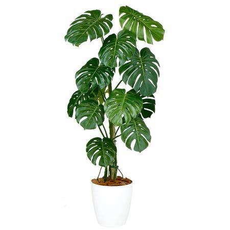 【直送】【人工観葉植物】モンステラバイン150(器タイプ:RP-300)99127※画像は器タイプ(RP)器要確認※返品・代引不可【07】【07】《 造花(人工観葉植物) 人工観葉植物「ま行」 モンステラ 》