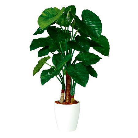 【直送】【人工観葉植物】クワズイモトリプル130(器タイプ:RP-265)98869※画像は器タイプ(RP)器要確認【07】【07】《 造花(人工観葉植物) 人工観葉植物「か行」 クワズイモ 》