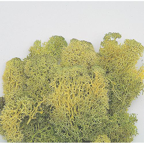 【プリザーブド】東北花材/フィンランドモス大袋 ライムグリーン 約1kg/71110【01】【01】【取寄】