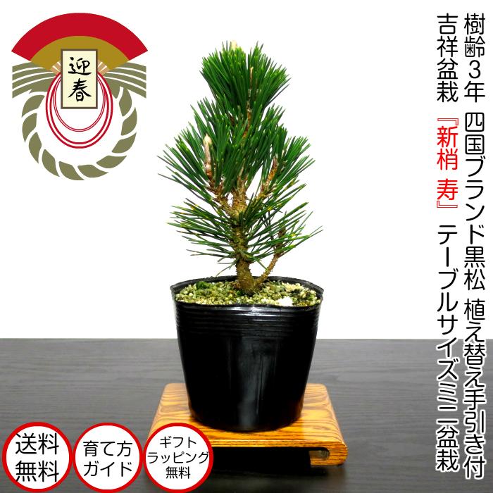 World-class bonsai brand