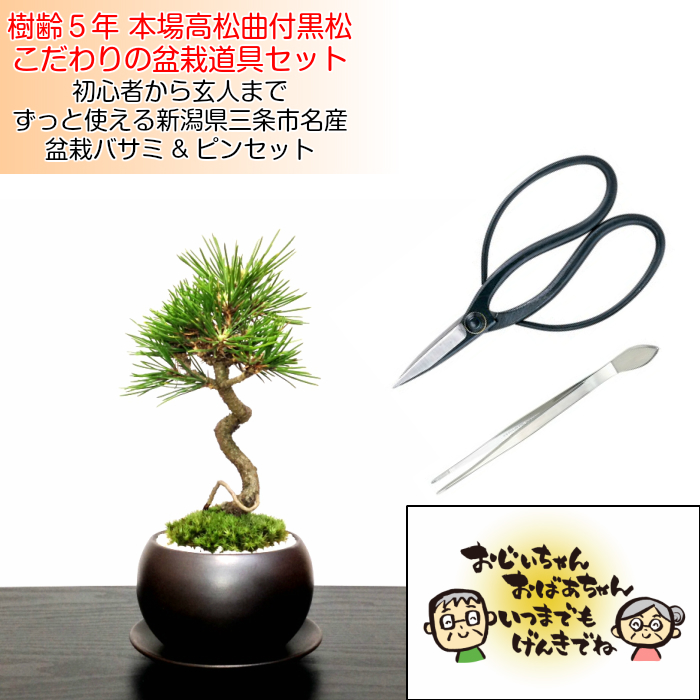 Hanagokoro Bonsai Mini Bonsai To Be Able To Display In The Twisting