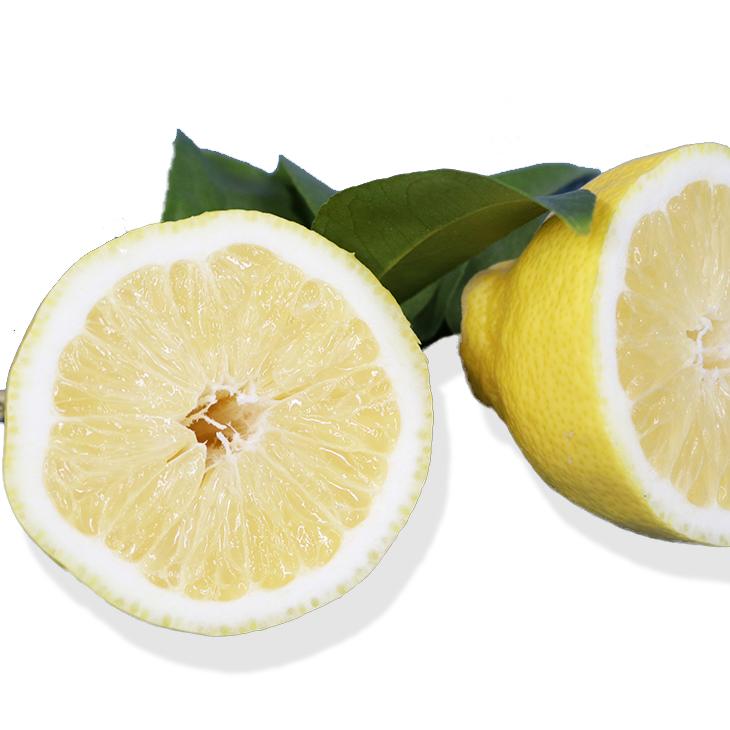 種ができない珍しい品種 料理などの用途に最適です レモン 苗 種無し 1年生 接ぎ木 ポット苗 苗木 香酸柑橘 果樹苗木 ギフト ファッション通販 檸檬 常緑 柑橘 柑橘苗木
