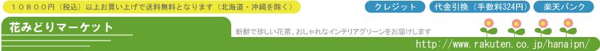 花みどりマーケット 楽天市場店:新鮮植物通販「花みどりマーケット」宿根草 バラ クレマチス 寄せ植え苗