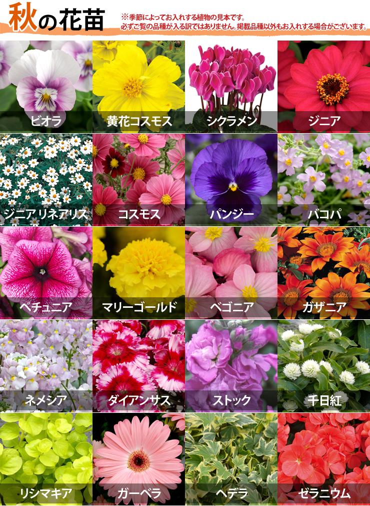 Hanaipn Delivered By Seasonal Flower Seedlings Flower Mix 20 Pot