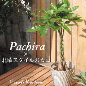 リビングに置く大きめな観葉植物!育てやすいおすすめはどれ?