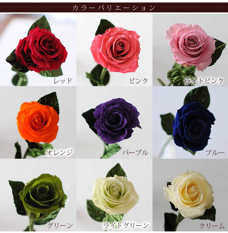 Hanako rakuten global market surprise gift roses 1 wheel one of 1 11 negle Choice Image