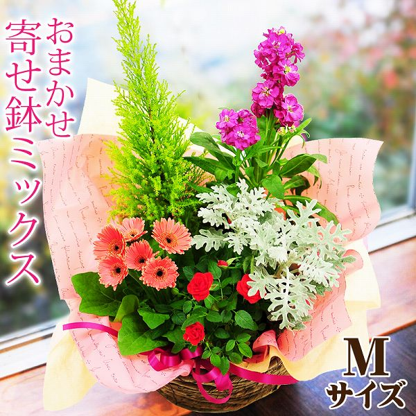 Flower Potted Hotchpotch Bowl Mixture Birthday Memorial Day Present Next Delivery Mothers To Entrust You