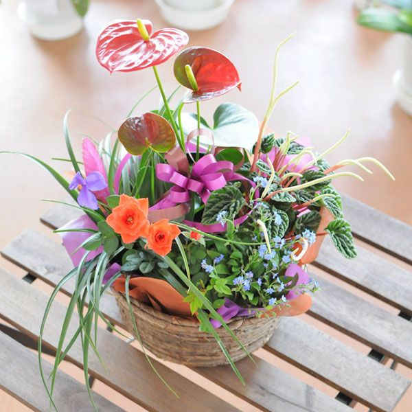 提著籃子 Omakase 我們碗花盆混合的生日紀念日盆栽花卉贈送盆栽母親的一天交貨花絢麗花卉禮品花丘比特成員餐廳雪絨花花禮物