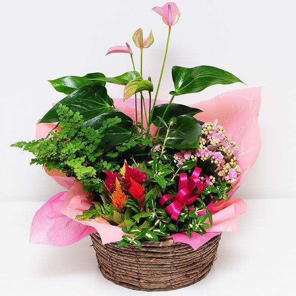 Pretty Potted Flower Gifts Us Bowl Mix L Birthday And We Celebrated Flowers Presents Farewell Retirement Celebration Cheap Next Day