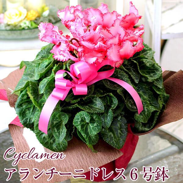 hanako | Rakuten Global Market: It\'s flower pot flowers potted ...