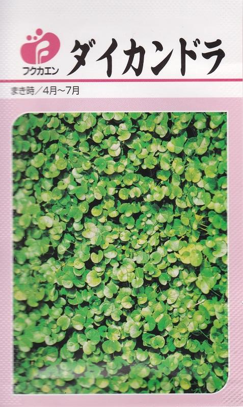 グランドカバー 舗 蔓 コート種子防草対策 当店一番人気 景観 ガーデニング 種子10ml つる性 ダイカンドラ