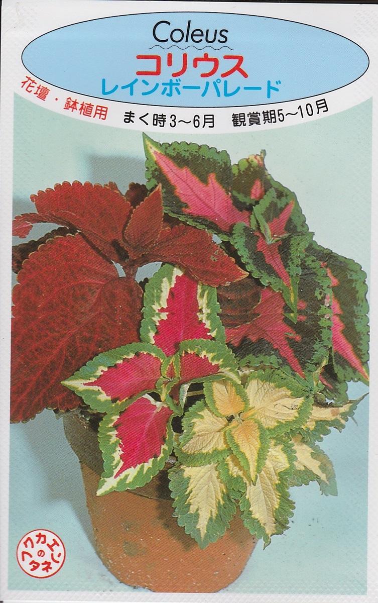 コリウス 奉呈 カラーリーフ 春蒔き種子鉢植え 花壇 コリウスレインボーパレード 種子 ファクトリーアウトレット 福花園種苗 フクカエン