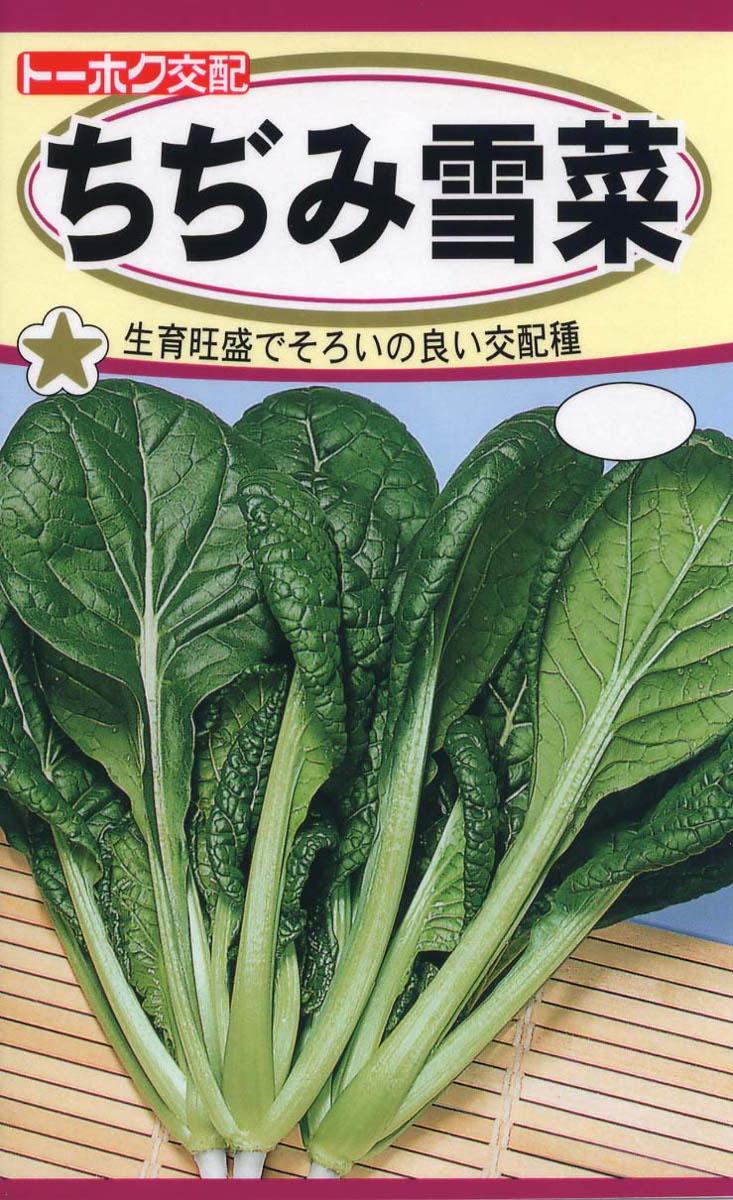 秋まき種子 メール便 格安 価格でご提供いたします トーホク交配生育旺盛でそろいの良い品種 種子 限定特価 ちぢみ雪菜トーホクのたね