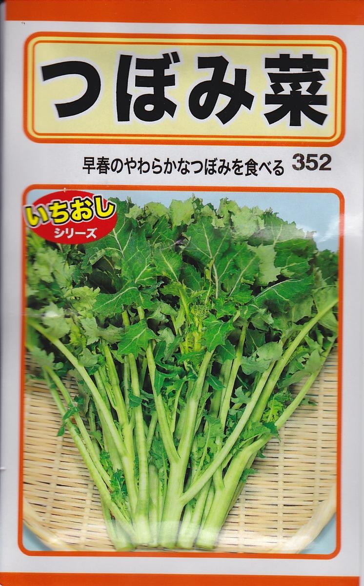 早春のやわらかなつぼみが美味しい とう菜 種秋まき種子 メール便対応 つぼみ菜トーホクのたね 新商品 新型 種子 トーホク 上質