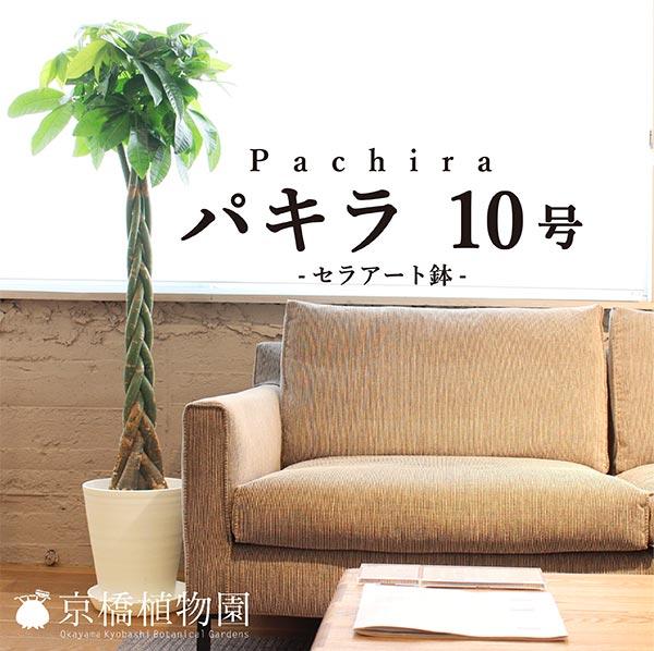 ★パキラ 10号(セラアート鉢)【インテリア おしゃれ 人気 通販 ギフト プレゼント】