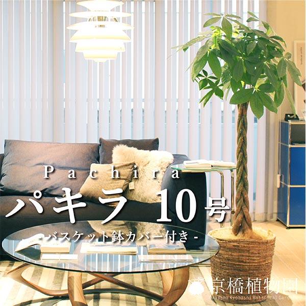 ★パキラ10号 (バスケット鉢カバー付き) 【インテリア おしゃれ 人気 通販 ギフト プレゼント】