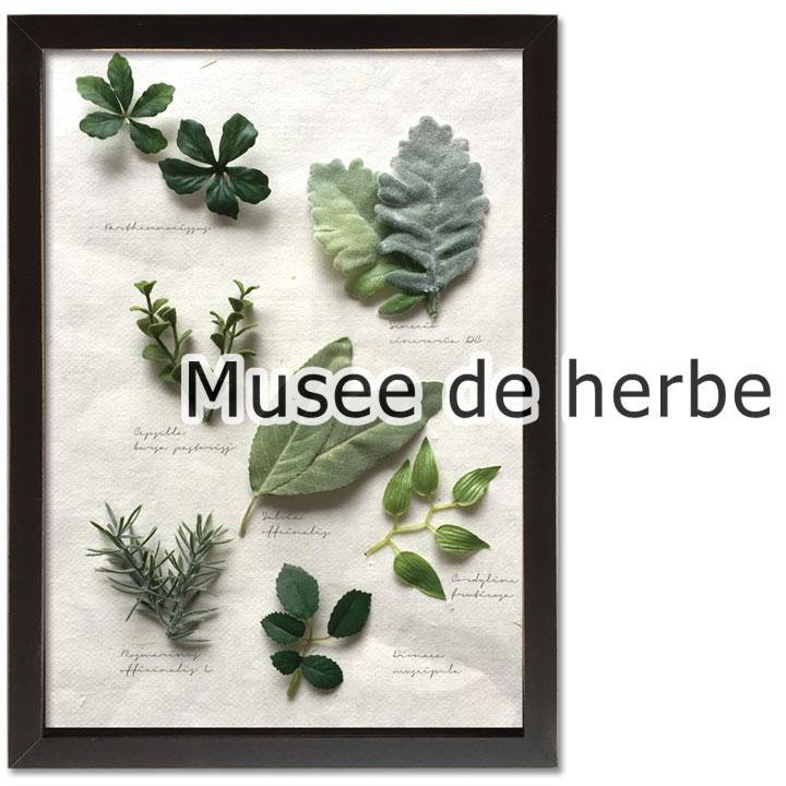 ハーブが好きな方に立体的なフレームでお部屋をおしゃれに演出します 信用 ディスプレイフレーム Musee de herbe 10種類からお選びいただけます ナチュラル お買得 ボタニカル ハーブ 楽ギフ_包装