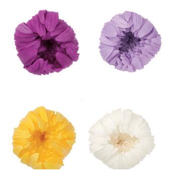 和風のデザインに 輪菊 小 スーパーセール プリザーブドフラワー 花材 資材 ハンドメイド 材料 マム 手作り 菊 未使用品