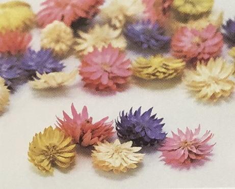 人気の チーゼルフラワー ドライフラワー ストア 花材 ハンドメイド 手作り 材料 お得なキャンペーンを実施中