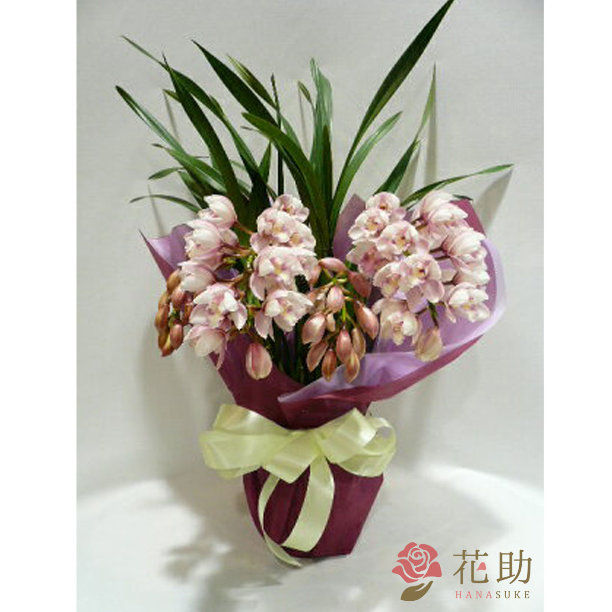 【鉢花】フラワーコンシェルジュが厳選した花屋の季節の花鉢 送料無料 10000円 【あす楽】【楽ギフ_メッセ入力】