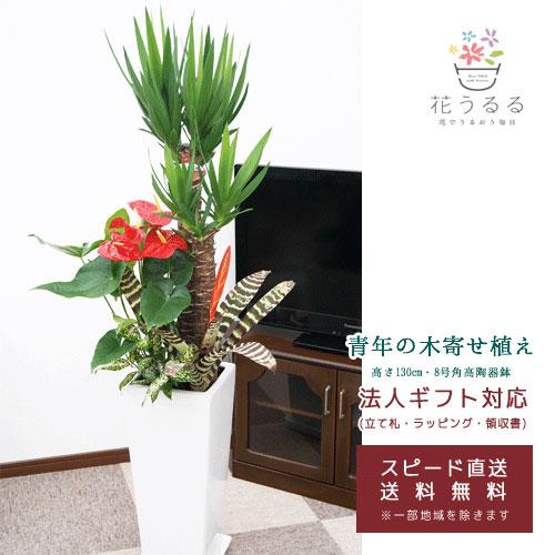 観葉植物 寄せ植え(ユッカ)8号角高陶器鉢|(白黒) 高さ約1.3m【kan-yosey08-001003】 大型 開店祝い 新築祝い 誕生日プレゼント 引越祝い インテリア おしゃれな植木鉢 送料無料