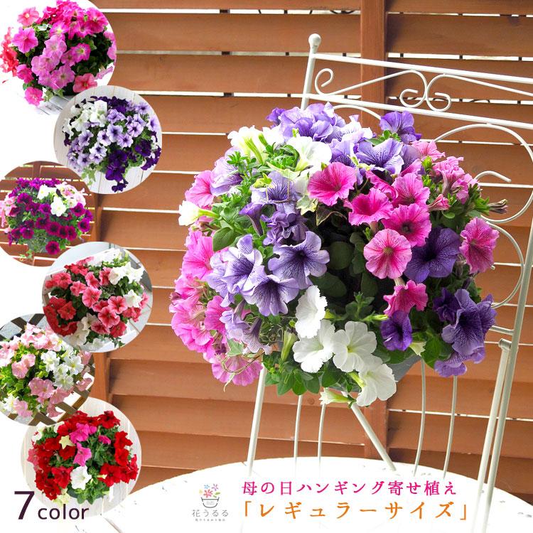 無料 日 母 送料 の 花 母の日 花
