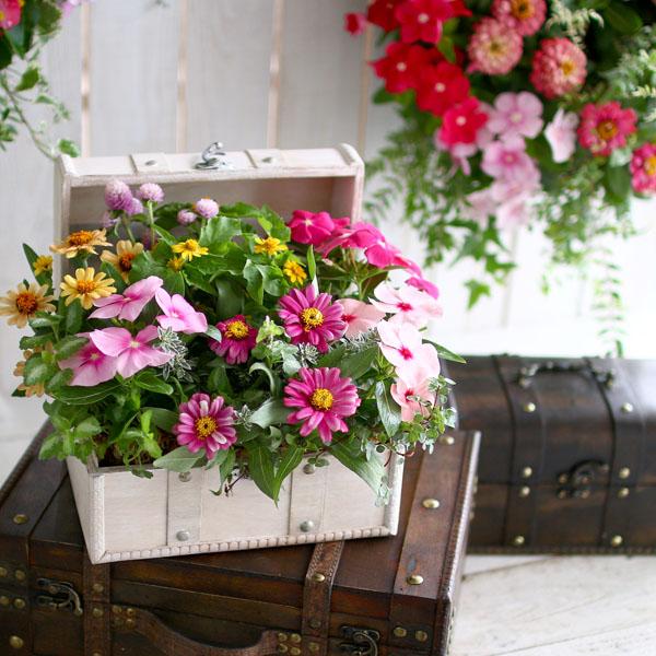 花うるる 安心の定価販売 おしゃれすぎる寄せ植えにご近所さんも釘付け 数量限定 送料無料 おまかせプレミア寄せ植え in トレジャーBOX~Sサイズ~ クラシック 上等 ギフト フラワー 精巧な作りのアンティークBOXに季節の花苗をアレンジ ギャザリング 寄せ植え