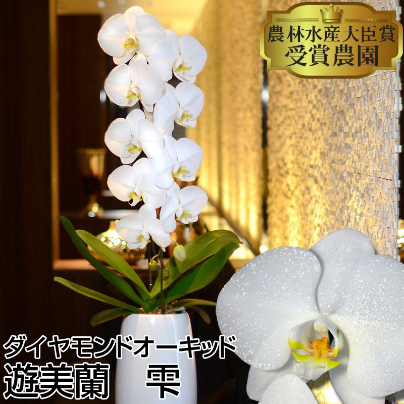 ダイヤモンドオーキッド 雫 胡蝶蘭1本立ち 蘭で美しく遊ぶ遊美蘭シリーズ 本州送料無料【営業日から3日後の配達】