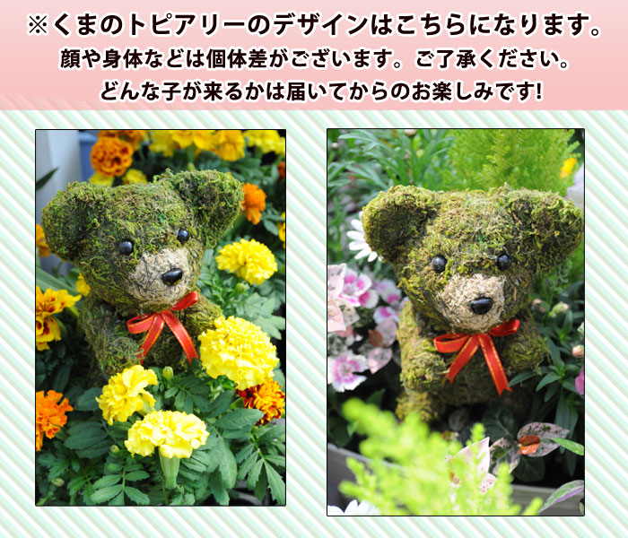 Hanayoshi rakuten global market like flowers topiary bonsai like flowers topiary bonsai birthday gift woman mother grandmother celebration housewarming party gift negle Images