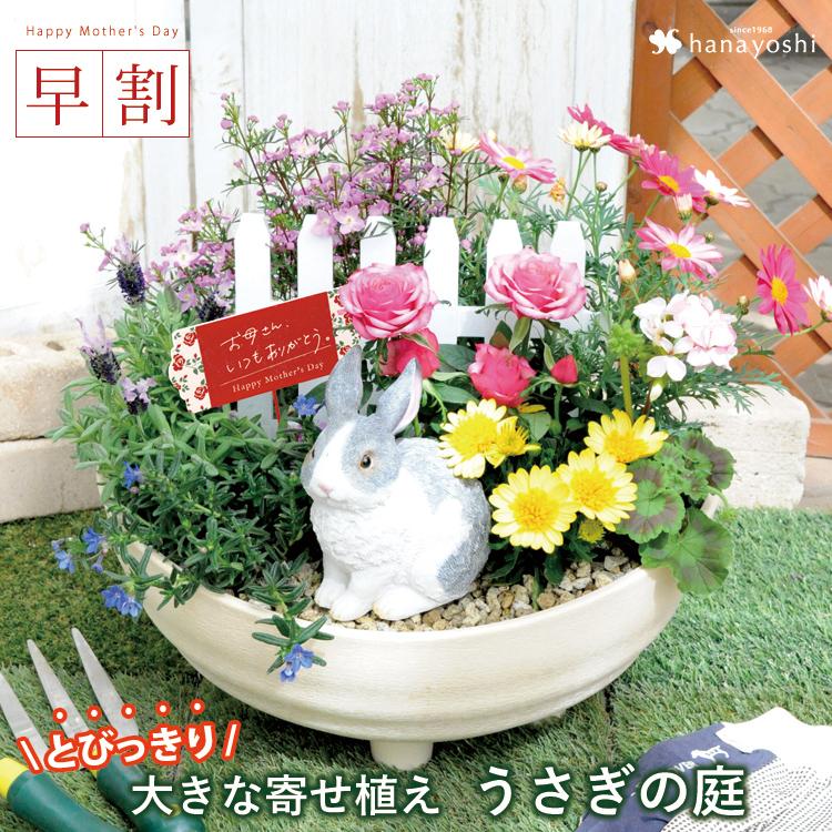 早割 母の日 ギフト 花 プレゼント 2019母の日限定の まるでお花畑 寄せ植え~うさぎの庭 5/7~5/12の間にお届け 送料無料 母の日 寄せ植え 鉢 鉢植え 花鉢 鉢花 母の日プレゼント 母の日ギフト