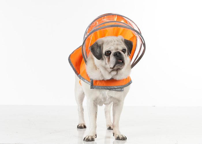【PushPushi】アメリカのセレブ御用達のおしゃれなドッグレインコート新登場!PushPushiライトニングラインドッグレインコート セーフティオレンジ Lサイズ【おでかけ お散歩 ドライブ 旅行 アウトドア 雨の日 台風】