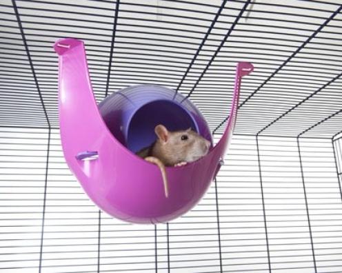 【SAVIC】ハウスにもハンモックにもなる球体型のハムスターハウスです。ベルギーサヴィッチ社製 ハムスターハンモック スプートニクXL fushia/violet 24個セット1ケース【うさぎ ラビット ハムスター フェレット 小動物】